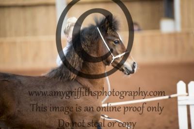 Class 17- Welsh C Filly Foal