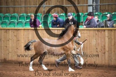 Class 18- Welsh C Yearling Colt