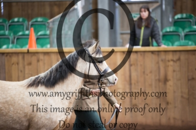 Class 21- Welsh C Filly/Gelding 2/3 year old