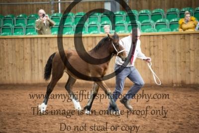 Class 23- Welsh D Filly Foal