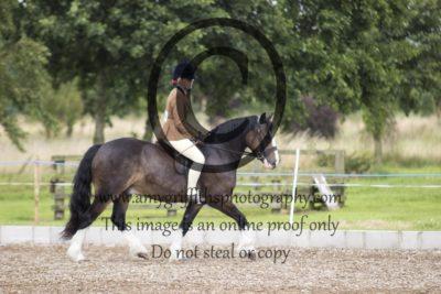 Class 16: Ridden Pony
