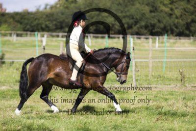 Class 5: Ridden Pony