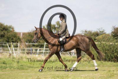 Class 11: Novice Horse