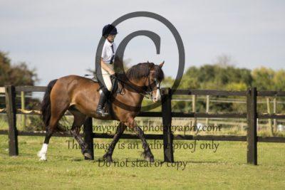 Class 26: Pleasure Horse/Pony