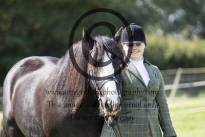 Class 38: In Hand Gelding/Stallion