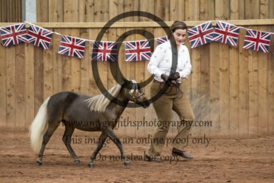 Class 143: Yearling Middleweight
