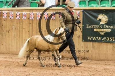 Class 144: 2&3 Yr Old Middleweight Type