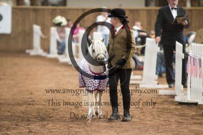 The Pampered Pony Supreme Champion