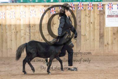 Class 165: Foal Champion