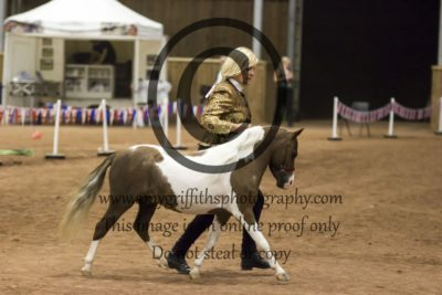 Grand Champion Scaled Down Showhorse