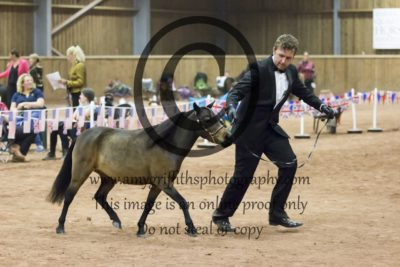 Grand Champion Category B Middleweight Horse
