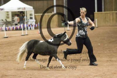 Grand Champion Colt/Stallion
