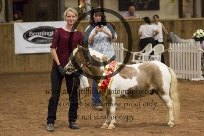 Grand Champion Category B Draft Horse