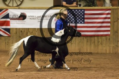 Grand Championship Category B Refined Horse