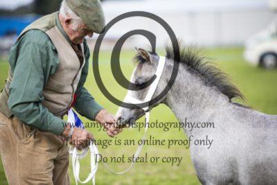 Foal Championship