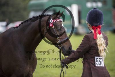 Inhand Riding Pony/ Hunter Pony