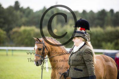 Show Pony/ Show Hunter
